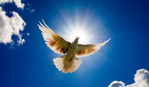 The Holy Spirit descending as a dove.