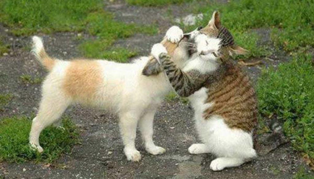 cat hugging dog