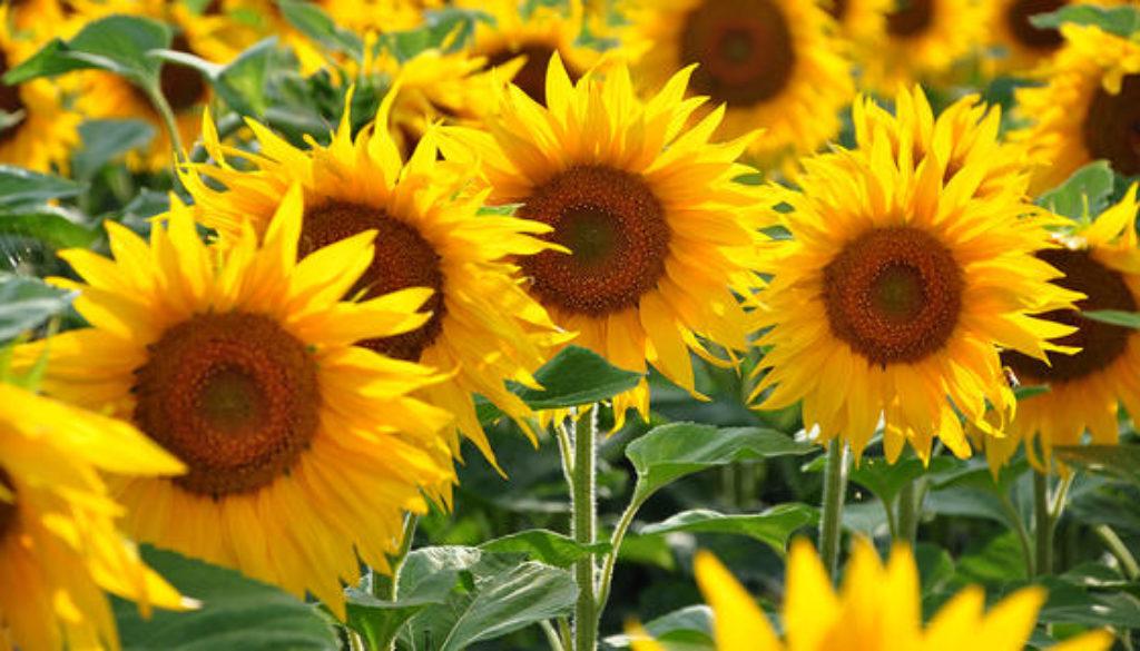 1 Corinthians 15:35-49A Flower for His Garden