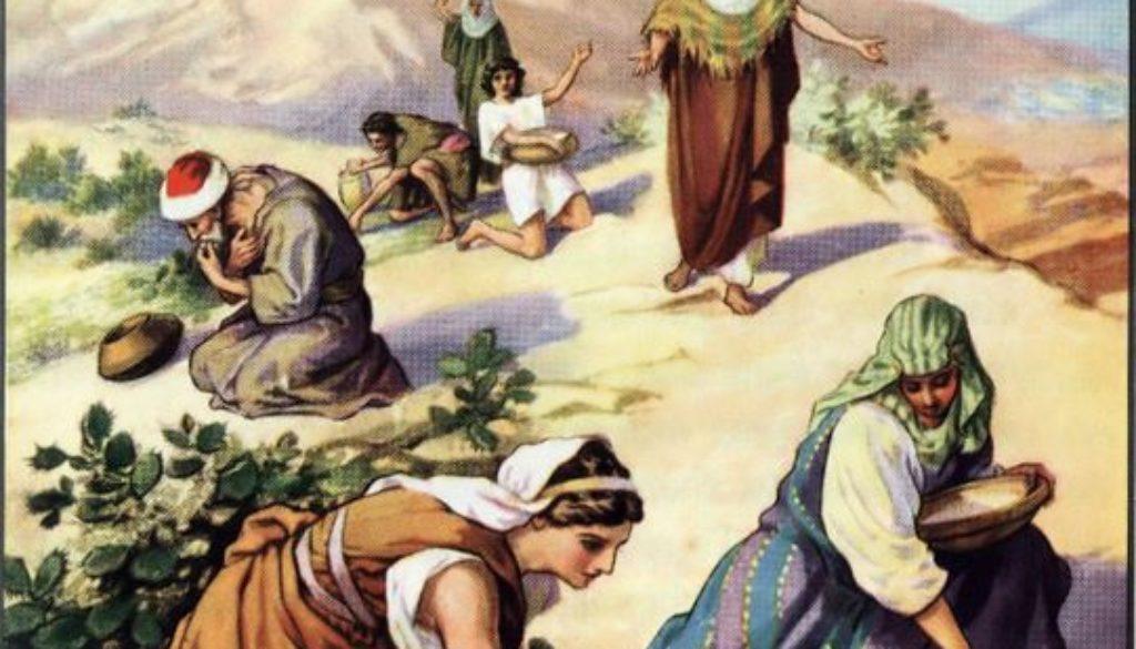Exodus 16:1-36 Manna Served