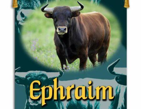 1 Chronicles 7:20-29 Ephraim's Tribe